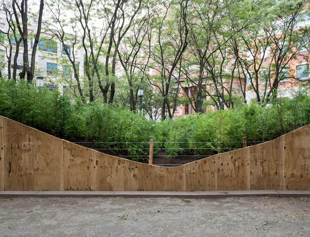 Community tree adoption event with Spencer Finch in New York